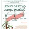 40 nowych drzew w Zamościu