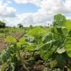 Ekologiczne rolnictwo to wyzwanie