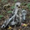 Królestwo ptaków mireckich lasów. Rozstrzygnięcie konkursu