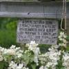 Monasterz- Obchody 100.rocznicy śmierci św. Brata Alberta
