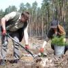 Nadleśnictwo Biłgoraj odnawia las