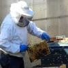 Trwa pomoc dla pszczelarzy