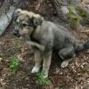 W tomaszowskich lasach znaleziono psa