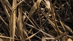 Susza - jak ratować plony?