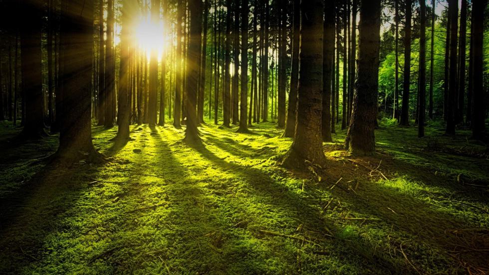 Biłgoraj. Zanocuj w lesie