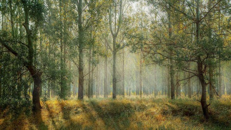 Zadbaj o swój las