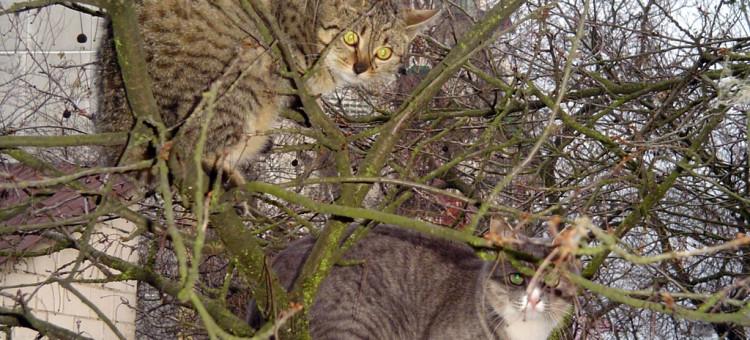 Biłgoraj. Pomóżmy kotom przetrwać zimę