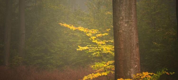 Zmiany zachodzące w przyrodzie jesienią